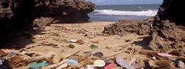 海岸を覆うビーチサンダル