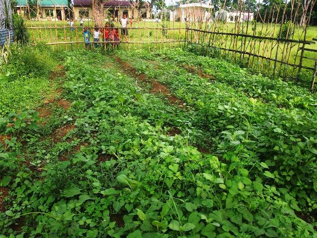 野菜との区別がつかないほど覆い茂ってしまった雑草