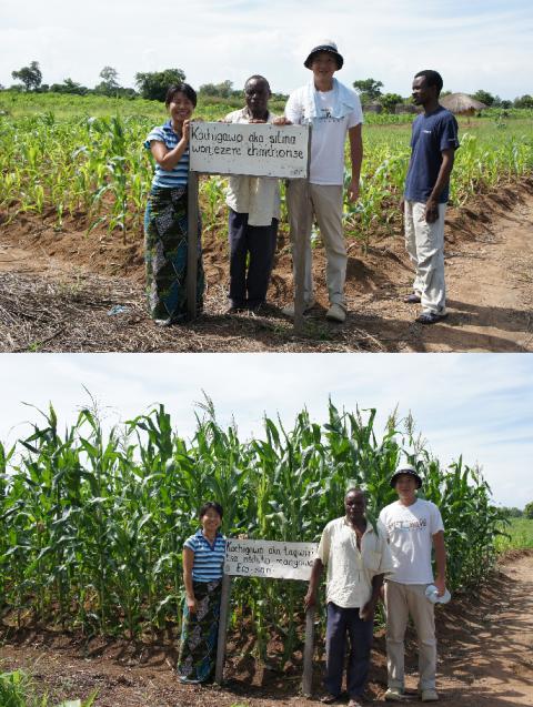 通常の畑(上)、エコサントイレの肥料を使用後の畑(下)