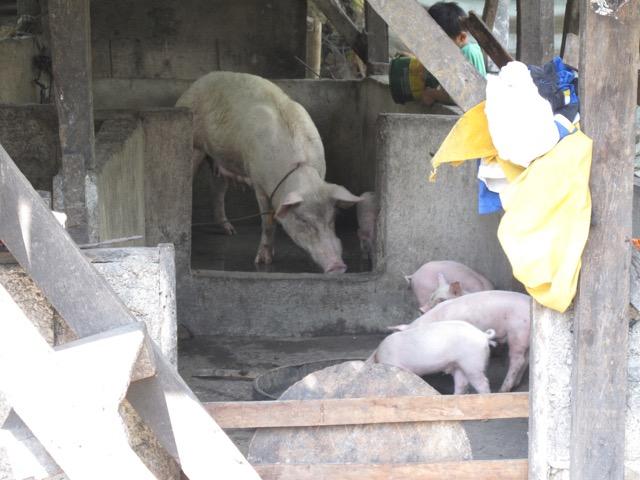 1階が豚小屋