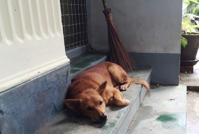 犬は家の外で眠ることから、「家を泥棒から守ってくれる」といわれる。ヤンゴン大学で