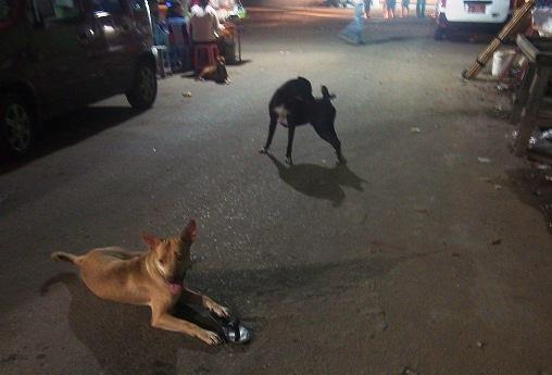 ヤンゴンの街中にはイヌが多い。タウンの路上で夜中、イヌが噛みあいのバトルを繰り広げていた