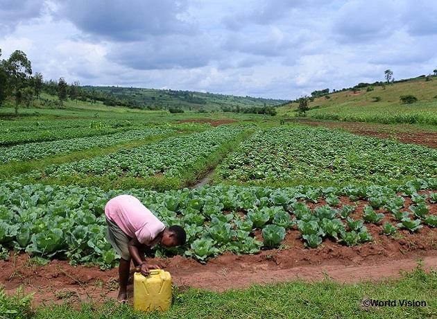ルワンダの農家が組合を作り、政府から借り受けた土地で比較的大規模な栽培をする(ワールド・ビジョン・ジャパン提供)