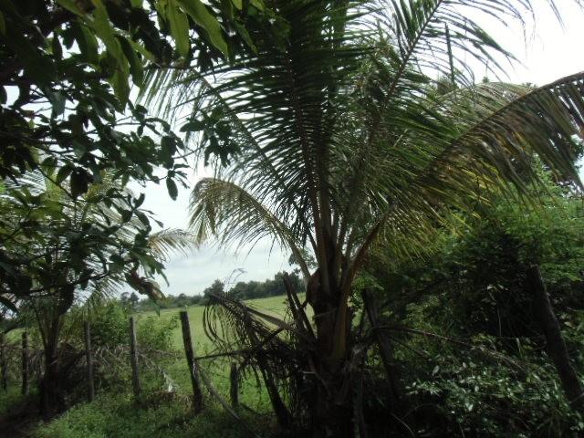 農地の境界は木の柵のみ。登記はされていない(カンボジア・シェムリアップ)