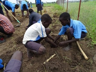 JCCP南スーダンでの野菜栽培を通じた民族融和事業(民族が異なる少年の協働) © Japan Center for Conflict Prevention