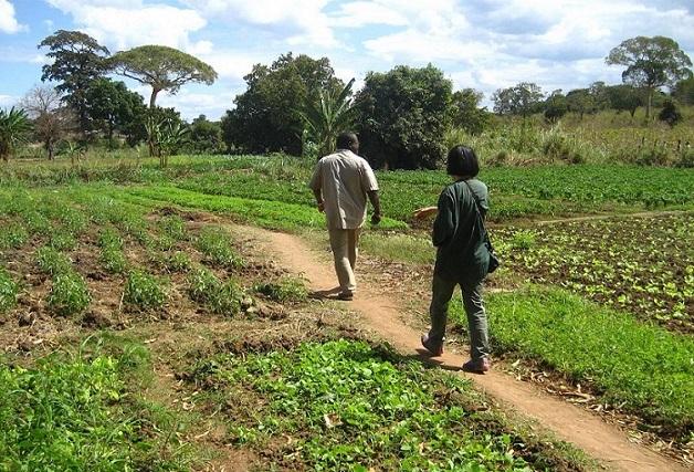 モザンビークのナンプーラ州は肥沃な土地で、収奪される前は水路もあり、さまざまな農作物が実っていたという。「(農地として)使えない土地」といわれる場所も「休ませている土地だ」と農民らは主張する(写真提供:JVC)