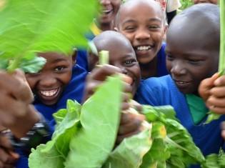 学校菜園を楽しむ子どもたち。牛ふんから作った有機肥料を使ったり、化学合成農薬を減らしたりして野菜を栽培する(写真提供:NPO法人テーブルフォーツー)