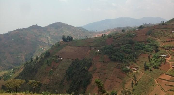 ブルンジは山の急斜面も農地として使うほど土地が足りない