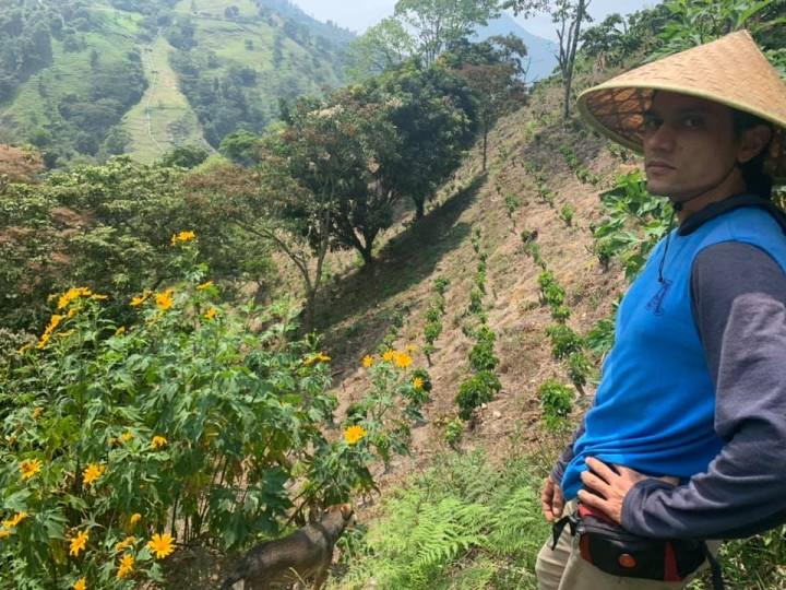 農園にはコーヒーの木以外にも、シェイドグロウンのために多くの植物を植えている
