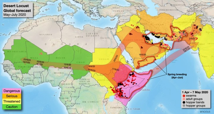 サバクバッタの飛来経路を予想する地図(FAOのバッタ予報サイトから)。東アフリカらから、東はインド、西はモーリタニアにまで到達する見通しだ