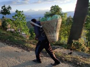 カゴいっぱいのキャベツを背負って、卸先の店まで山道を歩く農民(ネパール・シンドゥパルチョーク郡)