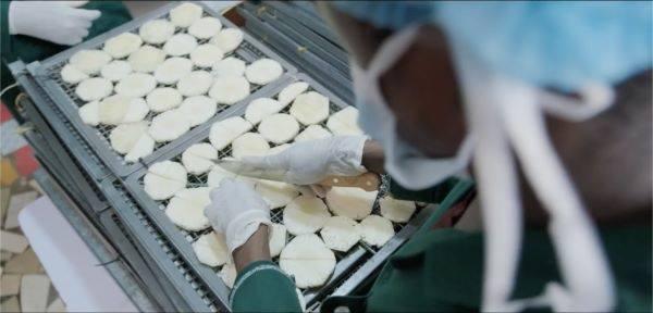 カットしたパイナップルを乾燥機にかけるためトレーの上に並べる(ガーナの工場で)