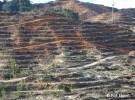 プランテーションのために伐採されたマレーシア・サラワク州の山(写真提供: FoE Japan)
