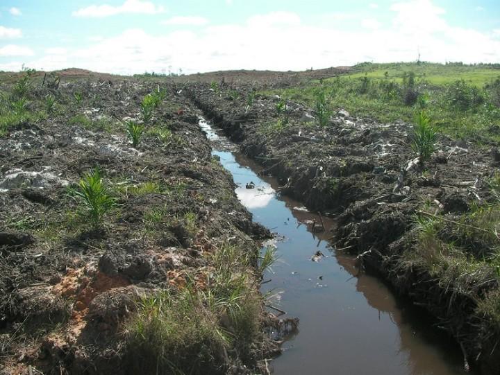 炭素が多く貯蔵されているインドネシア・西カリマンタン州の泥炭地(写真提供:FoE Japan)