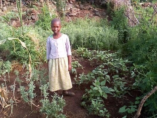 トマト、ササゲ、ケールに似た伝統野菜を植えた家庭菜園。保健ボランティアがこの家庭の食事についてモニタリングした際に撮影