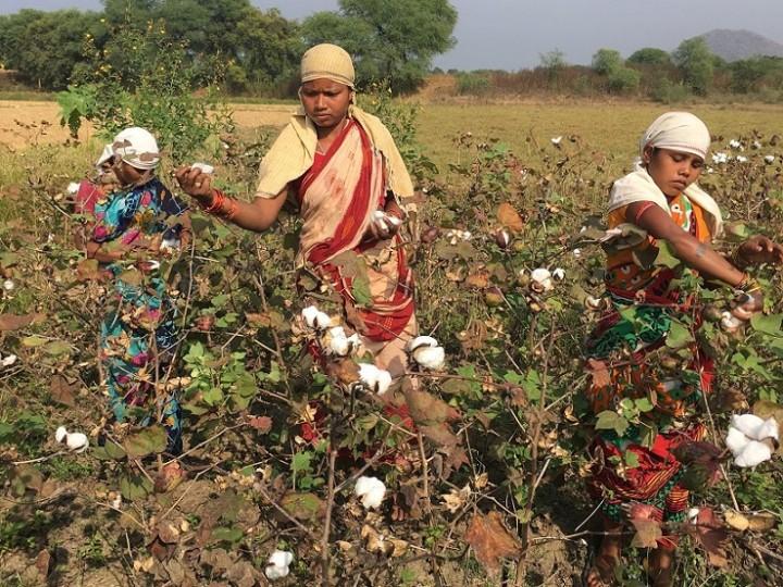 綿を収穫する女性たち(写真提供:PBP COTTON 葛西龍也氏)