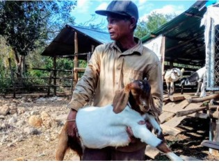 カンボジア・バッタンバン州カムリエン郡で、ヤギを飼育するチャプ・ポンさん。新型コロナで仕事を失った人たちにも、自分が繁殖させたヤギを分け与えた